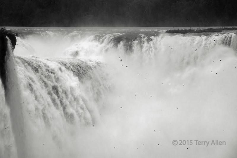 Dusky-swifts-in-the-falls,-Foz-do-Iguacu,-Brazil-Argentina-border