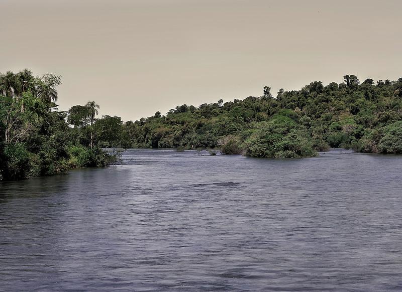 Jungle, Rio Iguassu, Iguassu, Brazil