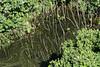 Pond-on-crater-floor,-Buraco-das-Araras,-Jardim,-Mato-Grosso-do-Sul,-Brazil
