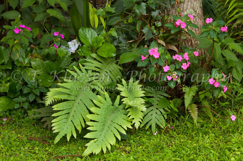 Vegetation and flowers in a tropical forest in Petropolis, Brazil, South America.
