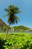 A lone palm tree and the Rodrigo de Freitas Lagoon in Rio de Janeiro, Brazil.