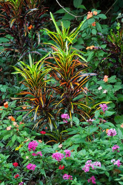 Tropical foliage and flowers on Corcovado Mountain in Rio de Janeiro, Brazil.