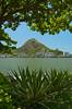 Agave century plants and the Rodrigo de Freitas Lagoon in Rio de Janeiro, Brazil.