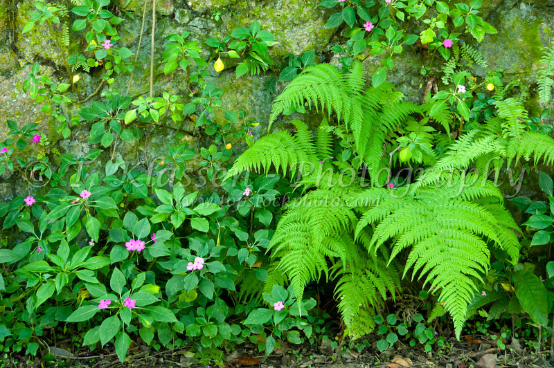 Tropical foliage of ferns and flowers in Catacumba Park in Rio de Janeiro, Brazil.