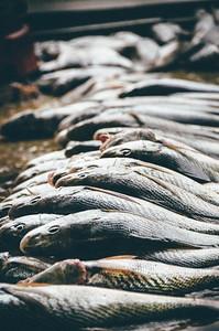 Fish anyone? (Rio De Janeiro BRAZIL)