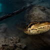 Slithering by redo_