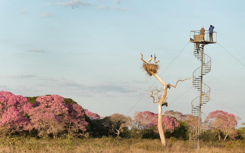 Jabiru nest tower at SouthWild Pantanal Lodge