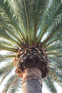 A Palm.