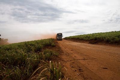 brazilie, provincie Sao Paulo, 6 nvember 2008 suikerriet etc. foto: Katrien Mulder