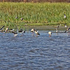 Documentation of the birds and vegetation on the far side of the second wetland/pond area.