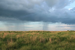 Rain beyond the Wetland Prairie.
