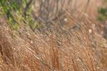 Wetlands Grass