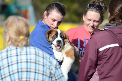 Jessica Smith holds onto her St. Bernard puppy Bindi which was rescued from a fire in their home on Creek Road in Beaver Township on Monday afternoon.