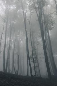 Autumn Fog II