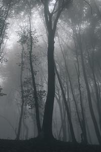 Autumn Fog I