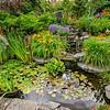1st Prize Water Garden