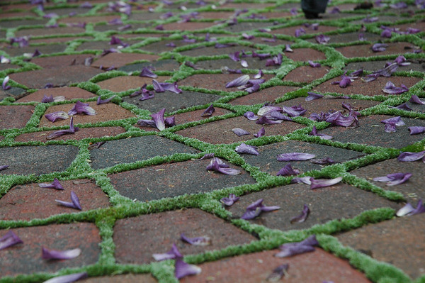 Clematis petals and moss-filled cracks.