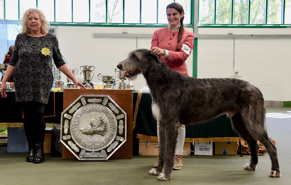 The Irish Wolfhound Club