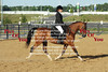 Sport Horse Under Saddle - Friday PM :