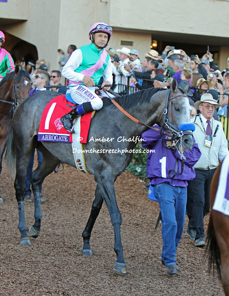 Arrogate defending Breeders Cup Classic Champion
