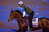 Horse Racing 2015: Breeders Cup Preparations OCT 27