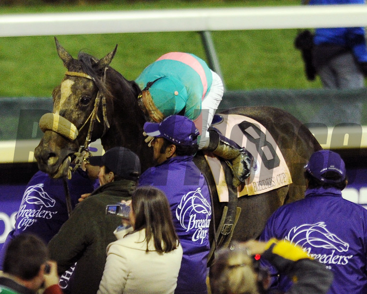 Zenyatta  and Mike Smith after the 2010 Breeders Cup Classic,  Churchill Downs; Louisville; KY; 11.6.10; Mathea Kelley