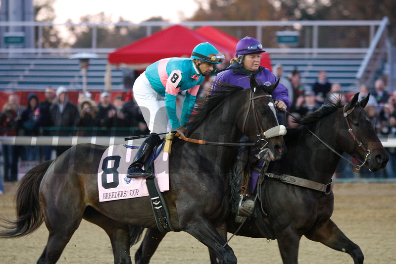 Zenyatta and jockey Mike Smith were intensely focused before the start of the Breeders' Cup Classic (G. I) at Churchill Downs on November 6, 2010.