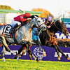 Caption: <br /> Court Vision with Robby Albarado up wins the TVG Breeders' Cup Mile at Churchill Downs in Louisville, Ky. on Nov. 5, 2011.<br /> Classic2 image<br /> Photo by Anne M. Eberhardt