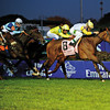 Caption: <br /> Perfect Shirl with John Velazquez wins the Emirates Airline Breeders Cup Filly and Mare Turf at Churchill Downs in Louisville, Ky. on Nov. 4, 2011<br /> FillyMareTurf  image798<br /> Photo by Anne M. Eberhardt