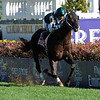 Regally Ready  wins the 2011 Breeders' Cup Turf Sprint (G2T) with jockey Corey Nakatani  <br /> Photo by Skip Dickstein