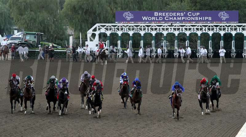 The field for the Breeders' Cup Classic head away from the starting gate at Santa Anita Park on November 3, 2012.<br /> Photo by Chad Harmon