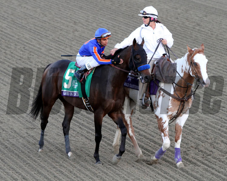 Rafael Bejarano calms Game On Dude prior to the Breeders' Cup Classic at Santa Anita Park on November 3, 2012.<br /> Photo by Chad Harmon