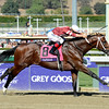 Caption: Tapizar wins the Dirt Mile.<br /> Breeders' Cup races at Santa Anita near Arcadia, California, on Nov. 3, 2012.<br /> BCRACES2012      Turf  image844<br /> Photo by Anne M. Eberhardt