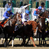 Shackleford w/Ramon Dominguez stumbles coming out of the starting gate at the beginning of the Breeders' Cup Dirt Mile at Santa Anita Park on November 3, 2012.<br /> Photo by Chad Harmon