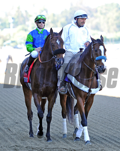 Rail Trip, second in the Breeders Cup Dirt Mile...<br /> © 2012 Rick Samuels/The Blood-Horse