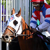 Groupie Doll w/Rajiv Maragh up leave the starting gate and go on to win the Breeders' Cup Filly & Mare Sprint at Santa Anita Park on November 3, 2012.<br /> Photo by Chad Harmon