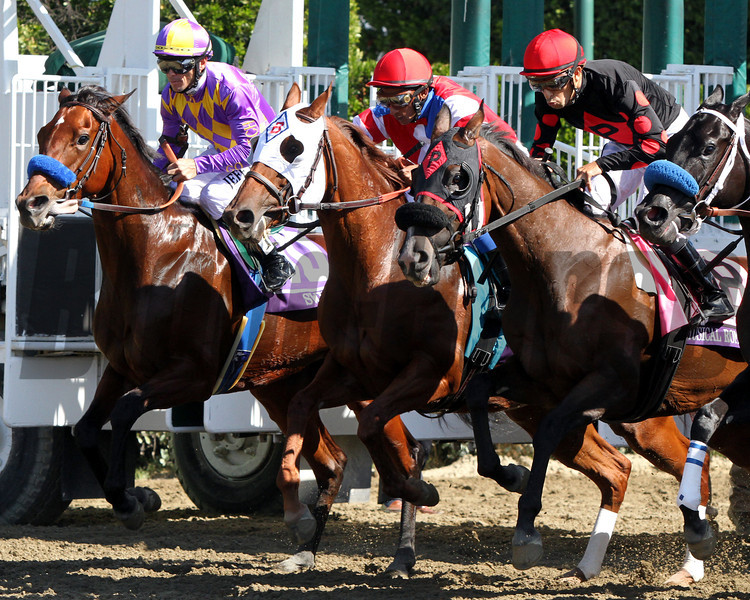 Switch (Left) w/Garrett Gomez up, Groupie Doll (Middle) w/Rajiv Maragh up, and Musical Romance w/Juan Leyva up break from the gate in the Breeders' Cup Filly & Mare Sprint at Santa Anita Park on November 3, 2012. Groupie Doll went on to win.<br /> Photo by Chad Harmon