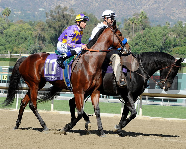 Switch in the Breeders' Cup Filly & Mare Sprint post parade.<br /> Photo by Dave Harmon