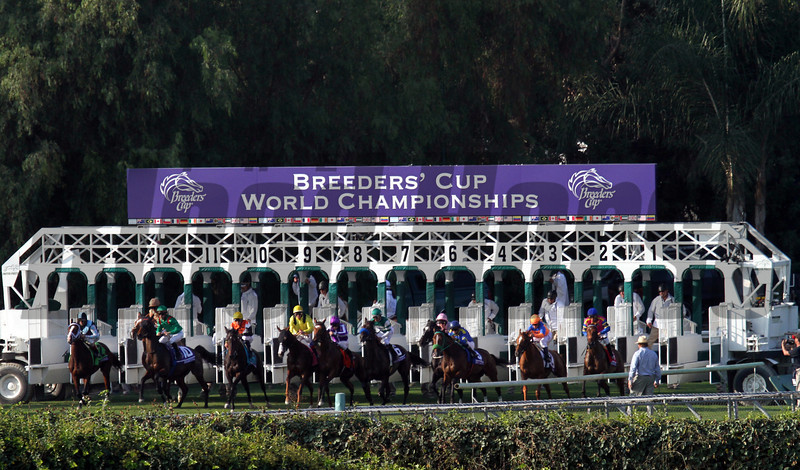 The field for the Breeders' Cup Filly & Mare Turf leave the starting gate in good order at Santa Anita Park on November 2, 2012.<br /> Photo by Chad Harmon