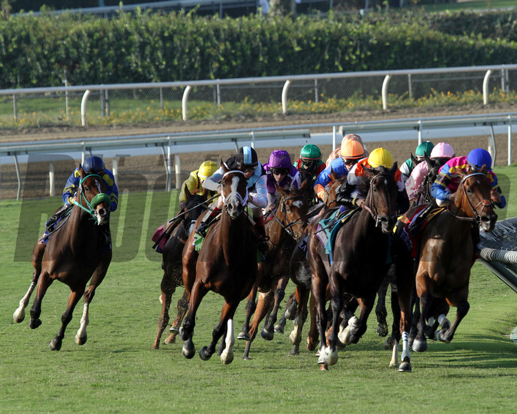The field for the Breeder's Cup Filly & Mare Turf come around the final turn at Santa Anita Park on November 2, 2012.<br /> Photo by Chad Harmon
