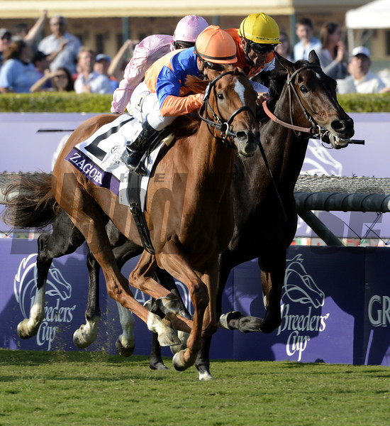 Zagora with jockey Javier Castellano outduels the field to the win in The Breeders' Cup Filly & Mare Turf at Santa Anita Park in Arcadia, California November 2, 2012.  Photo by Skip Dickstein