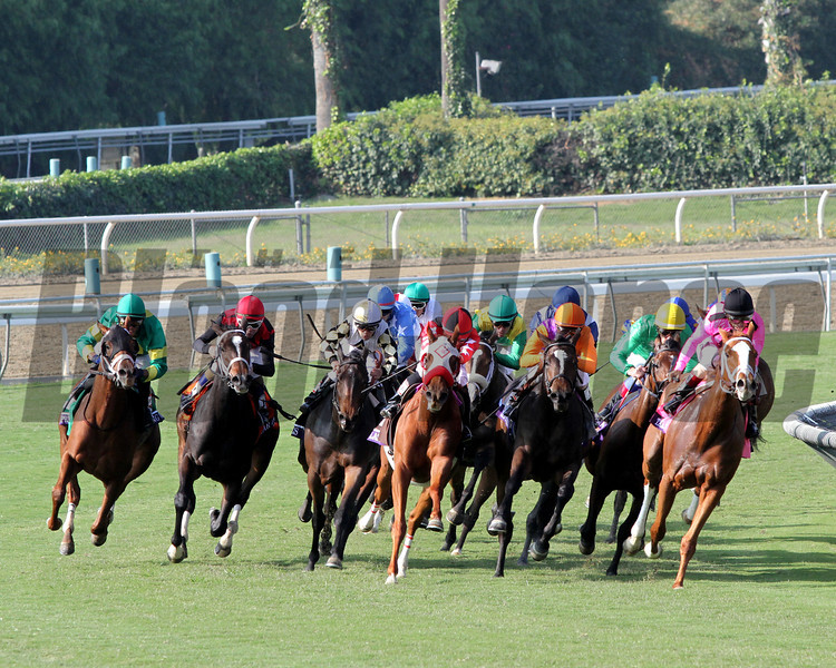 The field for the Breeders' Cup Juvenile Fillies Turf come around the final turn at Santa Anita Park on November 2, 2012.<br /> Photo by Chad Harmon