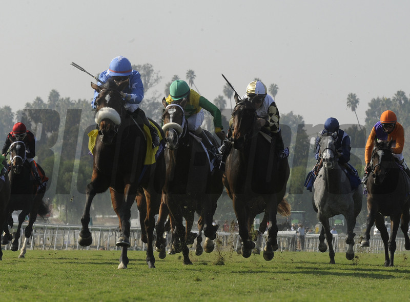 Flotilla wins at Santa Anita Park in Arcadia, California November 2, 2012.  <br /> Photo by Skip Dickstein