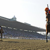 Beholder,<br /> Photo by Skip Dickstein