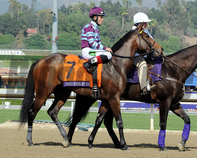 Sweet Shirley Mae finished in third in the 2012 Breeders' Cup Juvenile Sprint.<br /> Photo by Dave Harmon
