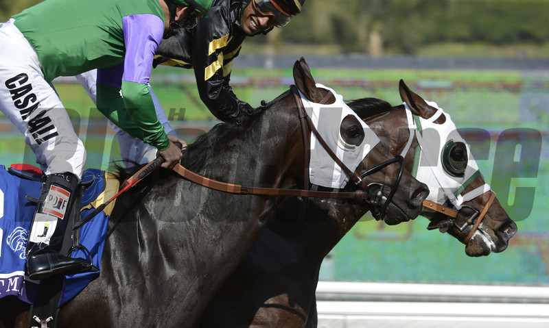 Hightail wins at Santa Anita Park in Arcadia, California November 2, 2012.  <br /> Photo by Skip Dickstein