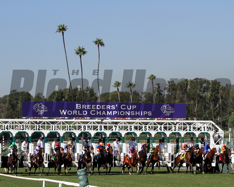 The field for the Breeders' Cup Juvenile Turf leave the starting gate at Santa Anita Park on November 3, 2012.<br /> Photo by Chad Harmon