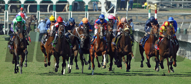 Start of the Gr1 Breeders Cup Juvenile Turf...<br /> © 2012 Rick Samuels/The Blood-Horse