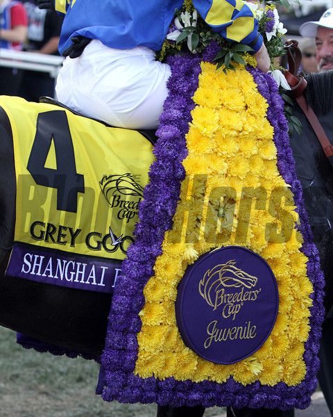 Shanghai Bobby's Breeders' Cup Juvenile saddle cloth and winner's blanket in the winner's circle at Santa Anita Park on November 3, 2012.<br /> Photo by Chad Harmon