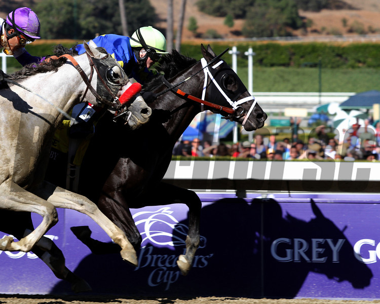 Shanghai Bobby w/Rosie Napravnikup cast a shadow on the Breeders' Cup signs as they win the Breeders' Cup Juvenile at Santa Anita Park on November 3, 2012.<br /> Photo by Chad Harmon